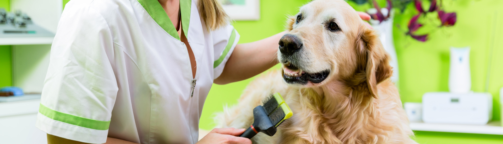 Pet Grooming Classes Knoxville, TN